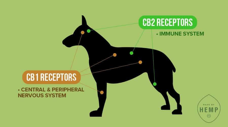 dog endocannabinoid system