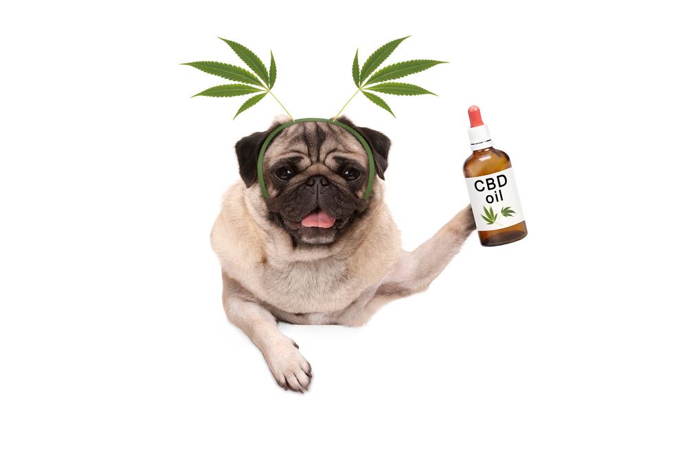 dog enjoying cbd oil