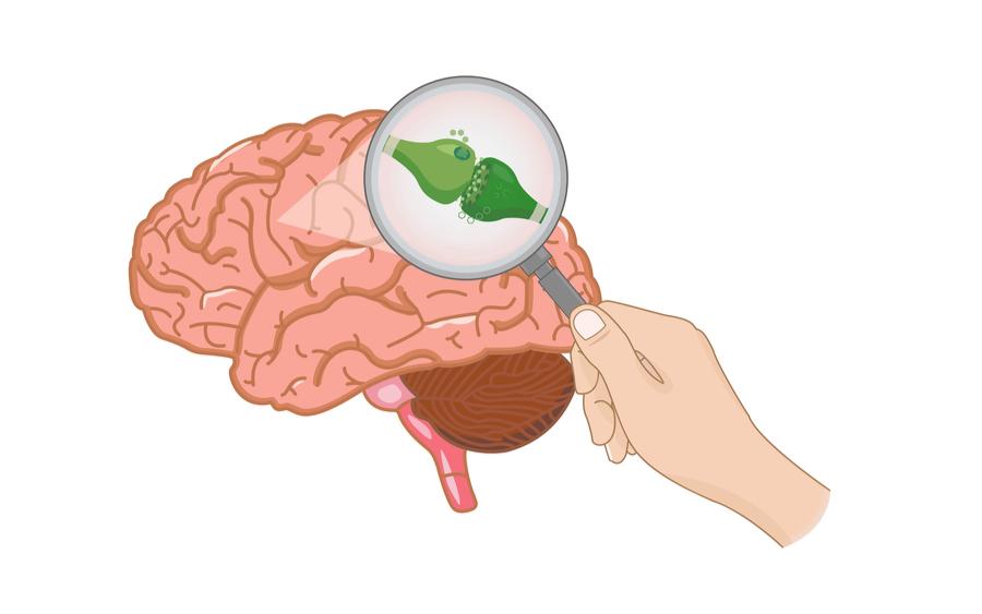 CBD Brain Connection